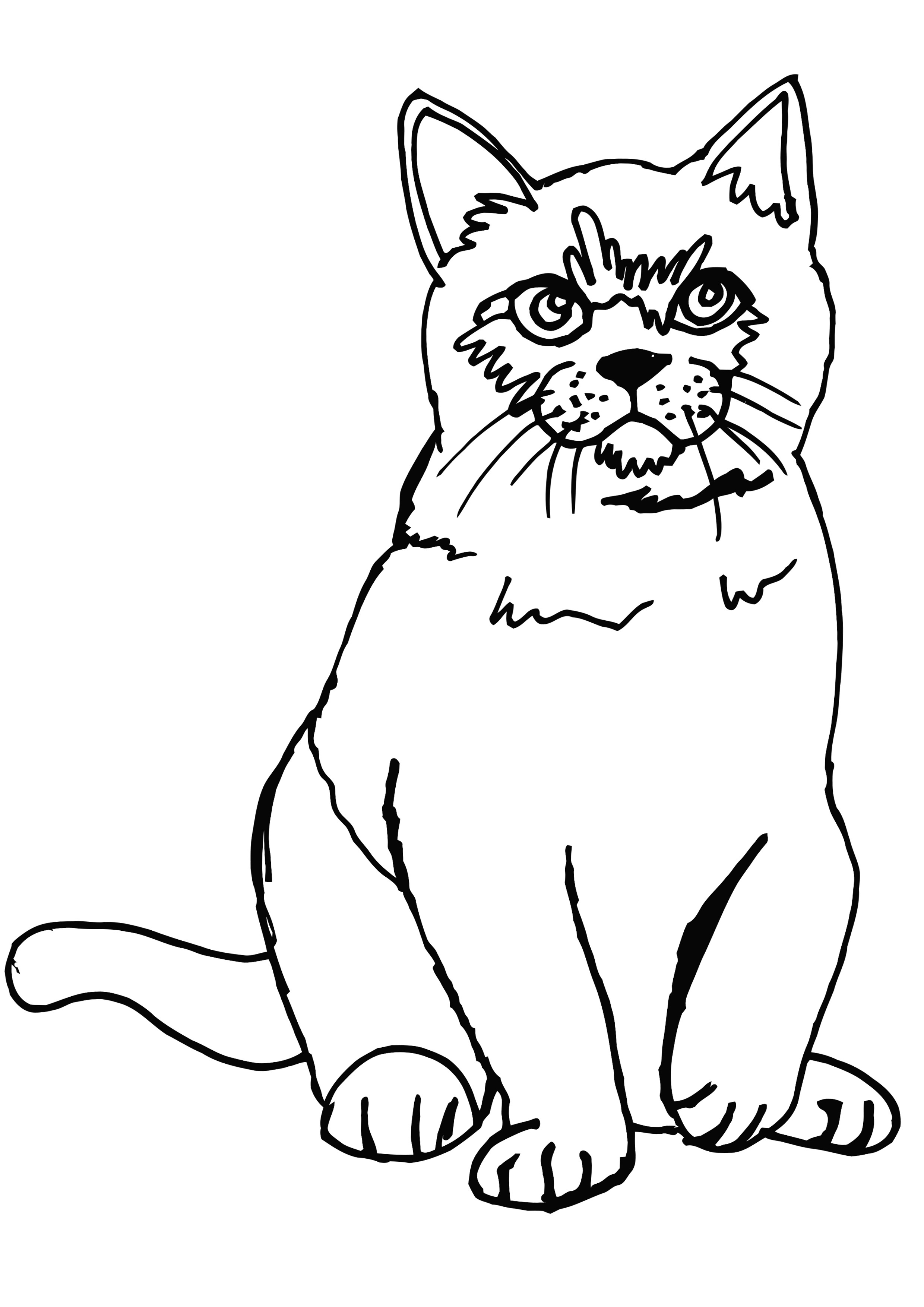Kot Perski Kolorowanka Do Druku