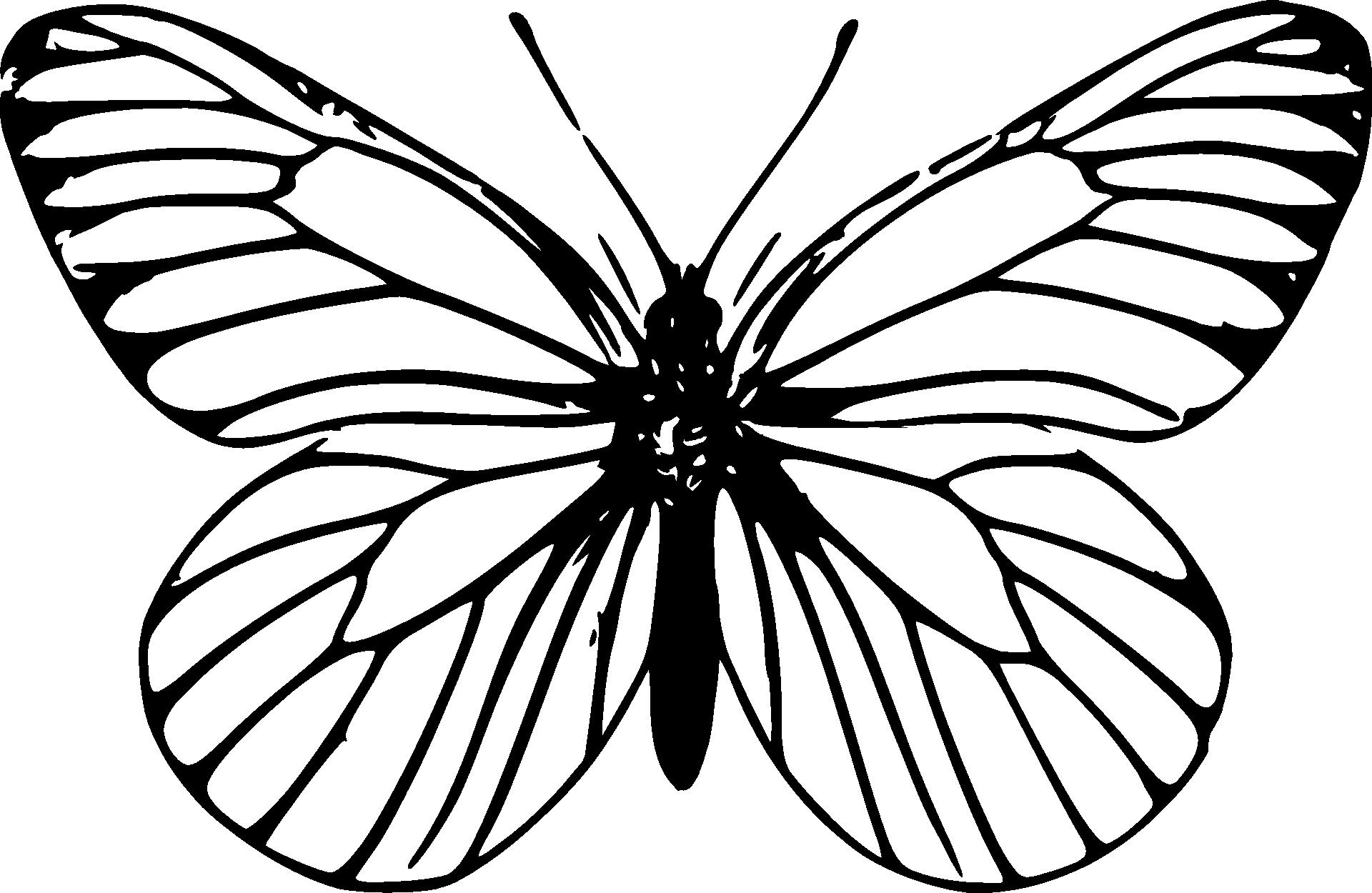Ladny Motyl Kolorowanka Do Druku