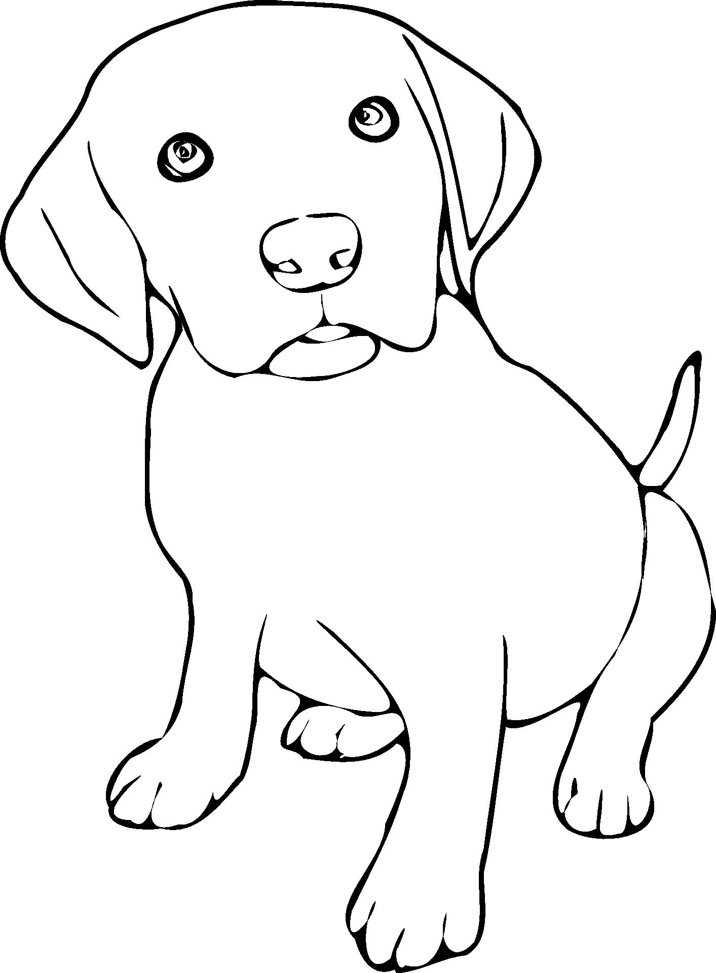 Labrador Kolorowanka Do Druku