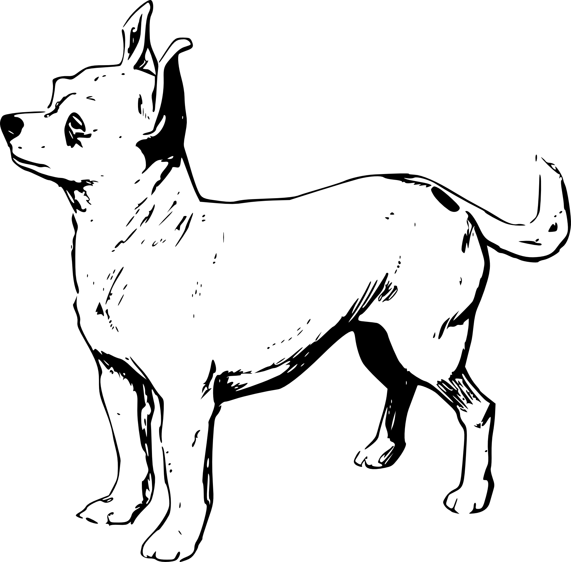 Chihuahua Kolorowanka Do Druku