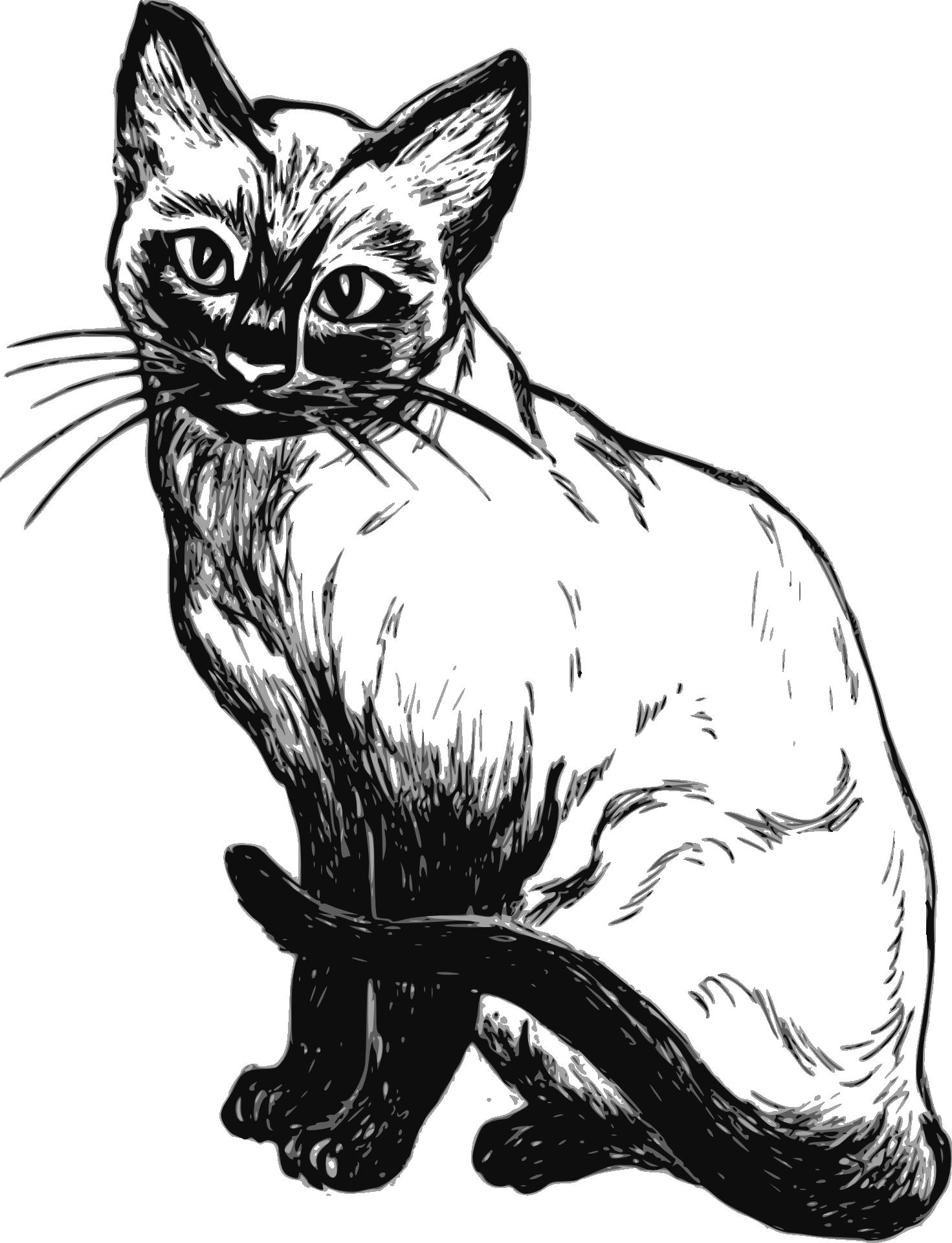 Syjamski Kot Kolorowanka Do Druku